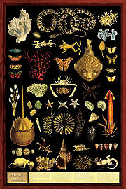 Curiosity Cabinet Poster